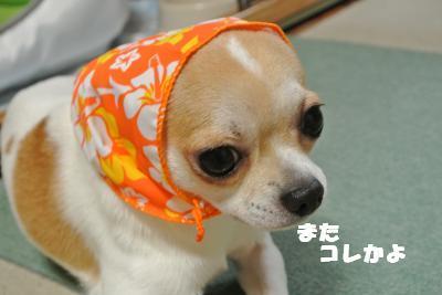 蟆城未+841_convert_20120827101629
