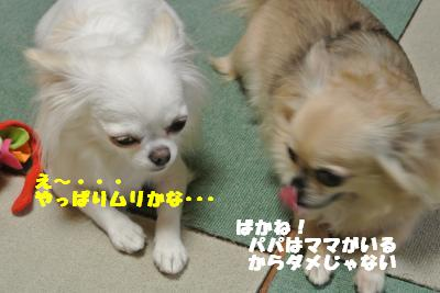蟆城未+904_convert_20120829101853