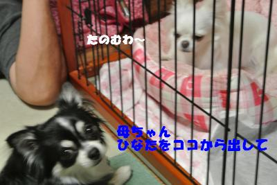 蟆城未+928_convert_20120830093123