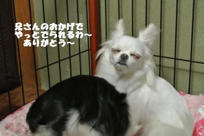 蟆城未+906_convert_20120830094728