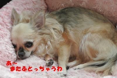 蟆城未+923_convert_20120907112341