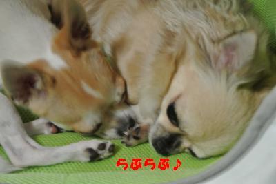 蟆城未+1083_convert_20120924105848