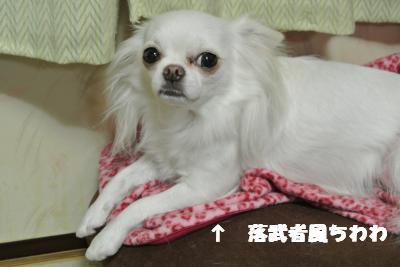 蟆城未+1080_convert_20120924105924