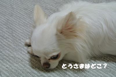 蟆城未+1128_convert_20121001132346