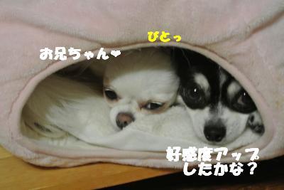 蟆城未+1136_convert_20121005104128