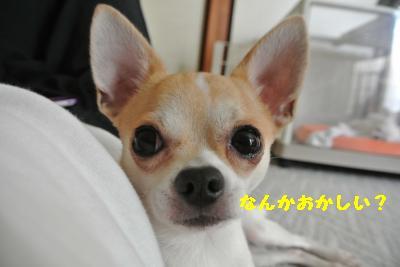 20120917豌エ荳・157_convert_20121008174954
