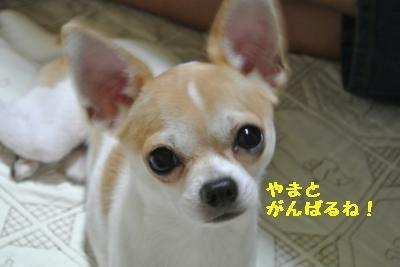 20120917豌エ荳・165_convert_20121008174755
