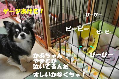 蟆城未+023_convert_20121010094944