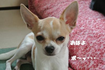 蟆城未+029_convert_20121010095303