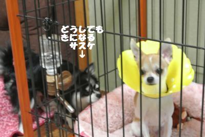 蟆城未+026_convert_20121011093732