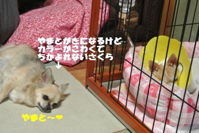 蟆城未+036_convert_20121011093759