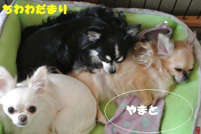 蟆城未+038_convert_20121011112041