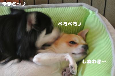 20121012+003_convert_20121012092715.jpg