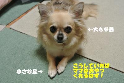 20121012+007_convert_20121012092857.jpg