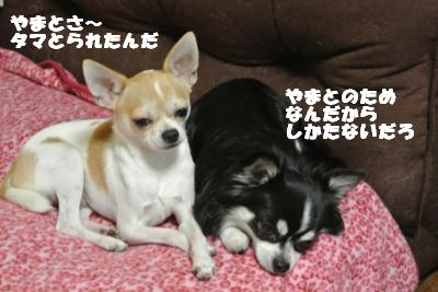 20121012+015_convert_20121012092311.jpg
