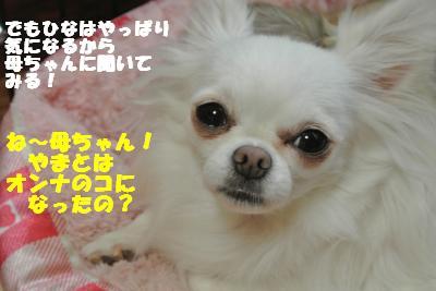 20121012+026_convert_20121012092101.jpg