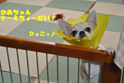 20121012+046_convert_20121015104010.jpg