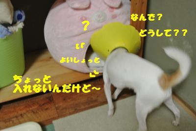 20121017+003_convert_20121017102258.jpg