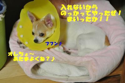 20121017+005_convert_20121017102403.jpg