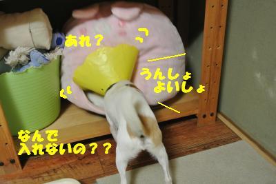 20121017+008_convert_20121017102326.jpg