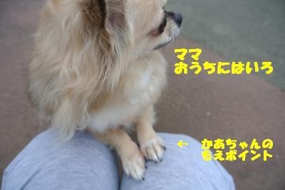 20121017+013_convert_20121017102733.jpg