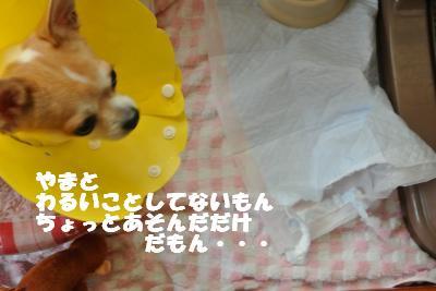 20121017+019_convert_20121018105502.jpg