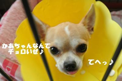 20121017+021_convert_20121018105539.jpg