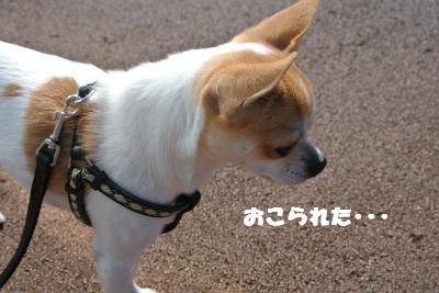 20121017+026_convert_20121024104017.jpg