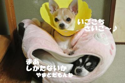 20121017+029_convert_20121019100208.jpg