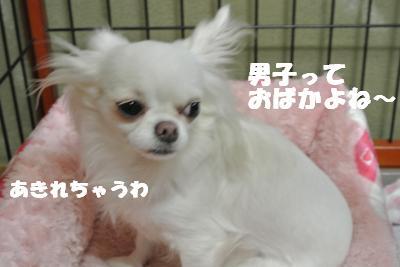 20121017+031_convert_20121019100240.jpg