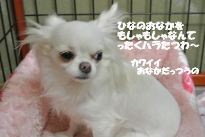 20121017+031_convert_20121212111420.jpg