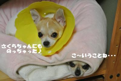 20121017+034_convert_20121019100457.jpg