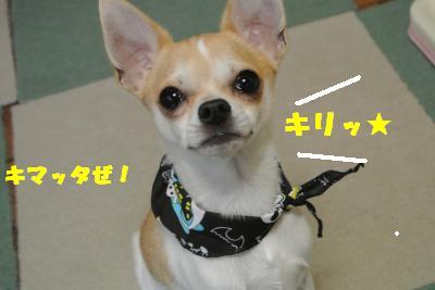20121017+052_convert_20121022103639.jpg