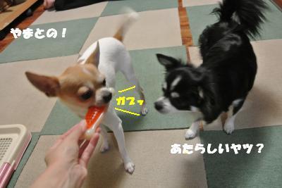 20121023+001_convert_20121023103559.jpg
