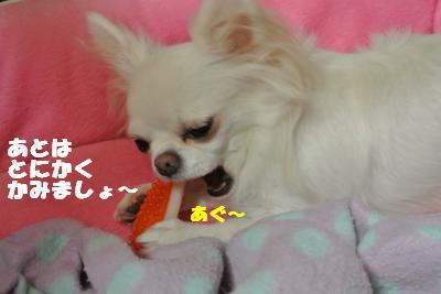 20121023+007_convert_20121025101730.jpg