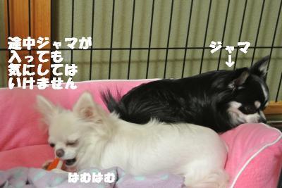 20121023+009_convert_20121025101852.jpg