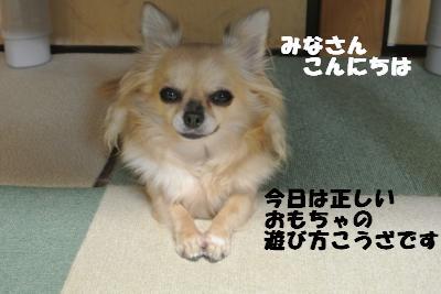 20121023+023_convert_20121025101451.jpg