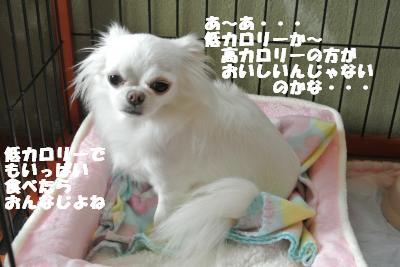 20121026+011_convert_20121026111811.jpg
