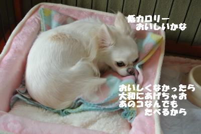 20121026+012_convert_20121026111841.jpg