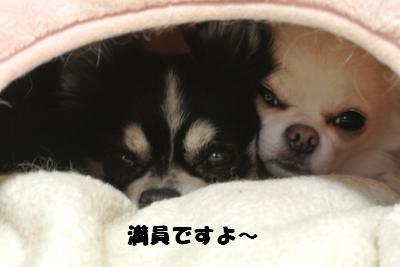 20121029+028_convert_20121030094958.jpg