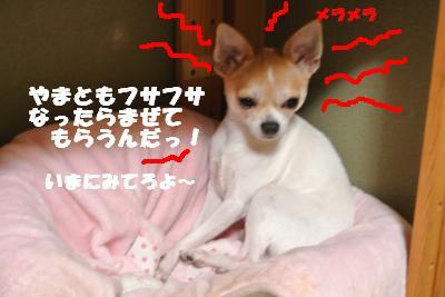20121101+004_convert_20121102100704.jpg