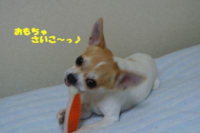 20121101+006_convert_20121105094617.jpg