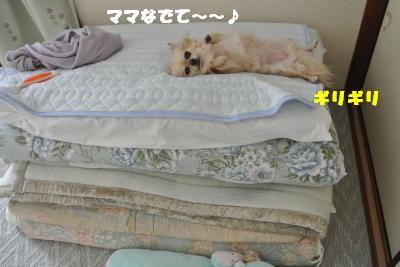 20121101+028_convert_20121105094916.jpg