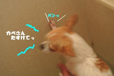 20121101+045_convert_20121105095424.jpg