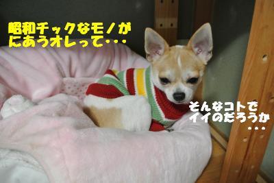 20121101+049_convert_20121105095616.jpg