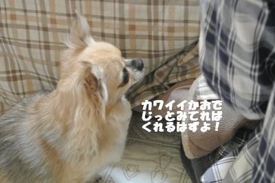20121109+005_convert_20121112153447_20121112154814.jpg