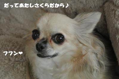 20121109+026_convert_20121109101016.jpg