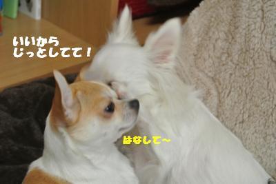 20121109+030_convert_20121112100632.jpg