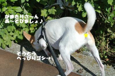 20121115+011_convert_20121115142252.jpg