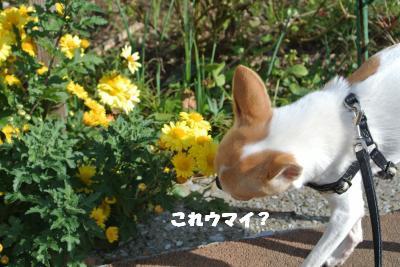 20121115+013_convert_20121115142401.jpg
